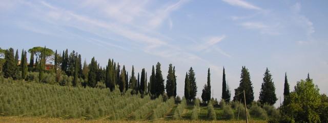 Toscana: Testo Nuova Legge Urbanistica N° 65/2014 – Vigente Dal 12-11-2014 Al 24-04-2015