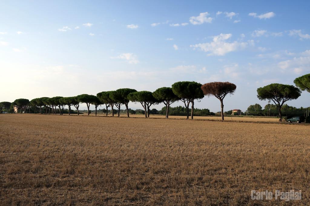 Tanto il prossimo anno c 39 il condono for Cambio destinazione d uso sblocca italia