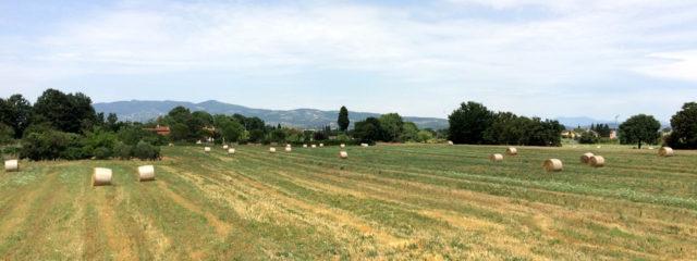 Toscana, Approvato Regolamento Sulle Disposizioni Del Territorio Rurale Ai Sensi LR 65/2014
